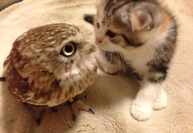『飛び猫』カメラマン撮影!SNSでキス写真が話題のフクロウ&子猫の写真集『フクとマリモ』発売