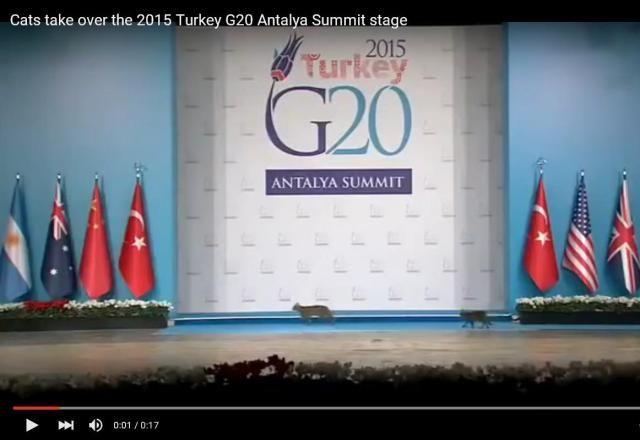 G20サミットに3匹のねこちゃんが侵入