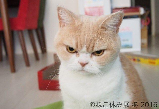 「ねこ休み展 冬 2016」間近!スター猫勢ぞろいで前回は2週間で5,000人動員