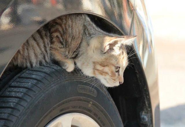 日産が「#猫バンバンプロジェクト」発進!もうねこの悲しい事故が起きないように…