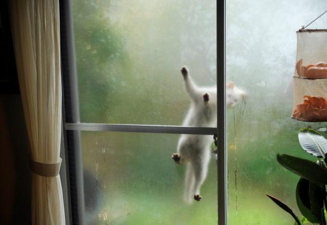 「庭猫」のやってくる自然体の暮らし-『庭猫』フォトグラファー安彦幸枝さん<後篇>