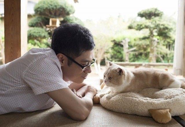 人気ゲーム「ねこあつめ」がまさかの実写映画化!!注目のスター猫は?