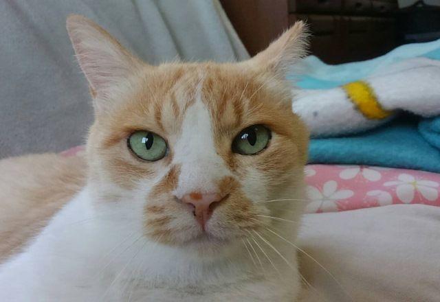 ねこを飼いたい人必見!懸命に生きる元野良猫ジャスくんとネグレクトの話<猫パトロール>
