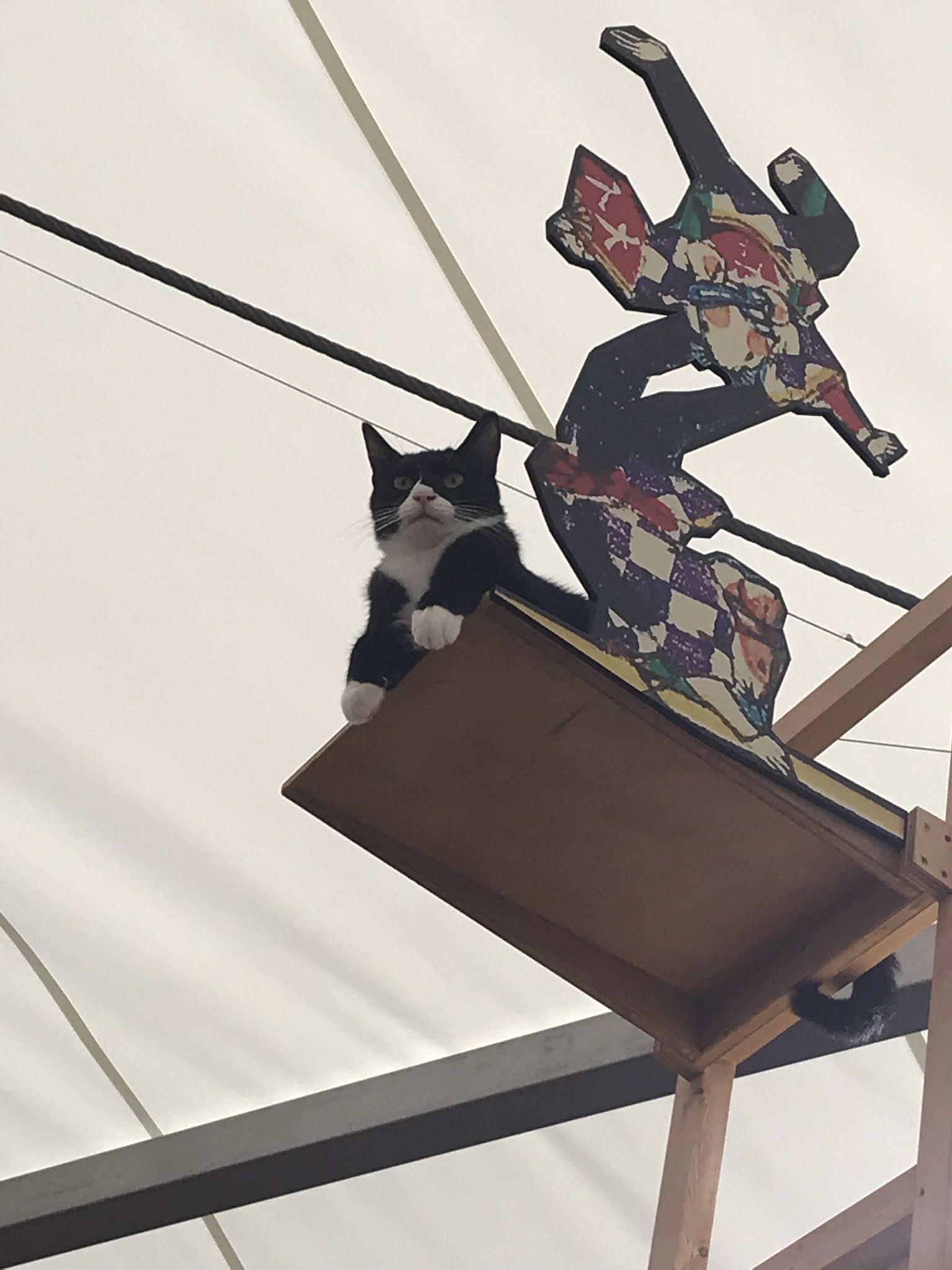 上からネコ