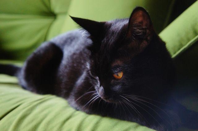 憂いのある黒猫