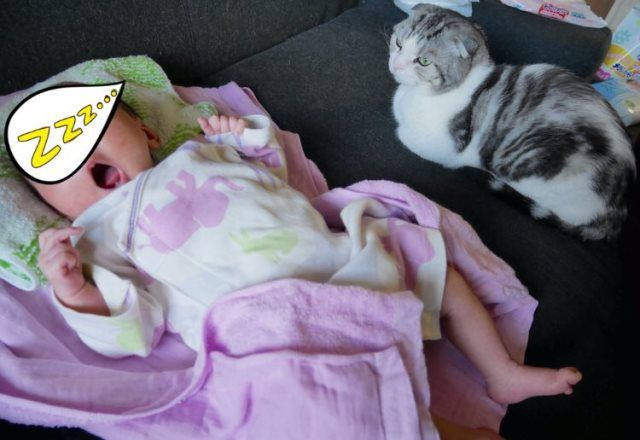 公式ニャンバサダーまっぷーちん日記11月~赤ちゃんと僕