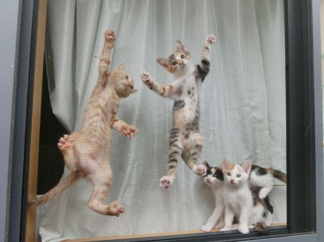 さまざまな柄の子猫ちゃんたち