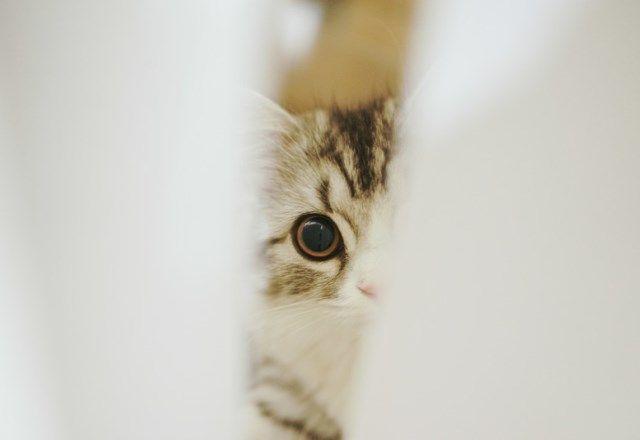 V3達成したのはどのねこ?好きな猫種ランキングTOP10!