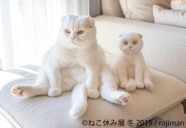 「ねこ休み展」冬の本祭間近!今回は新スター猫登場・ニャイトパーティーも!