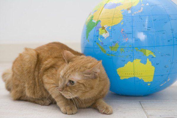 地球とねこ
