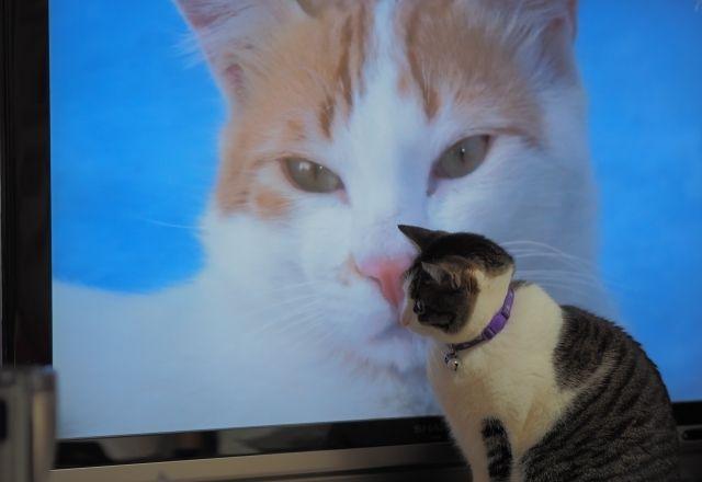 連休中や癒されたいときにおすすめの「癒しの猫活映画」!5選