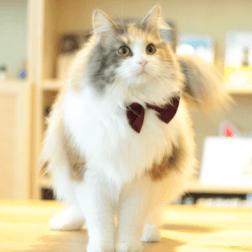 代表猫チェルシー