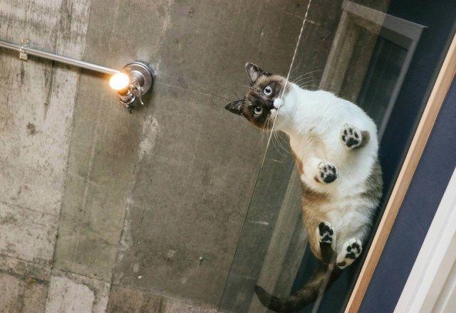 8/8は「世界猫の日」!ねこも人間も幸せになれる「ねこねこ電力」って?